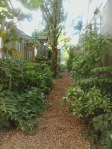 Hazelnut path